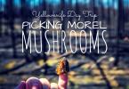Morel Mushroom Picking
