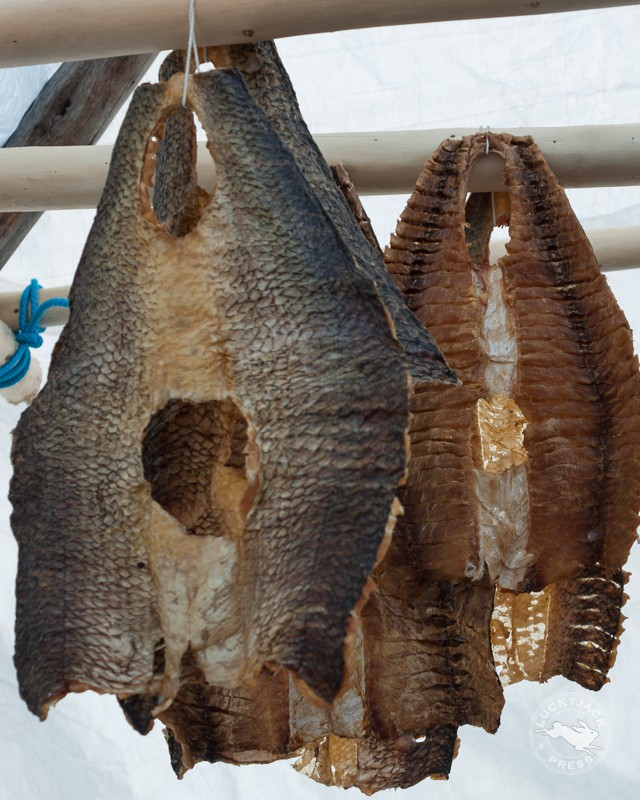 Drying fish is just one way the Dene people preserve food.  Dry fish is a healthy snack, lightweight and easy to transport.