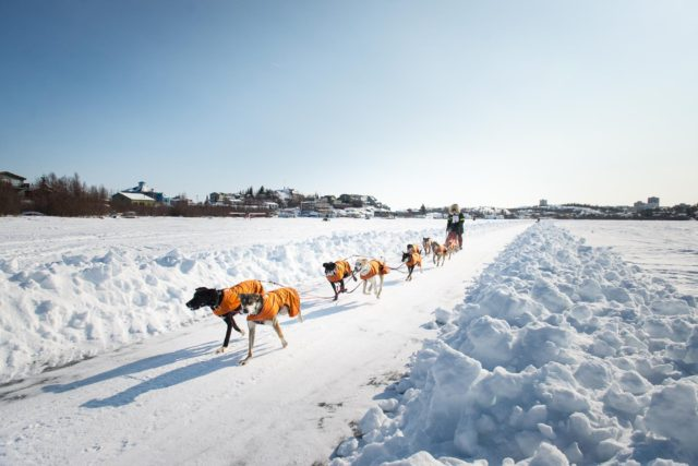 Yellowknife Dog Sledding
